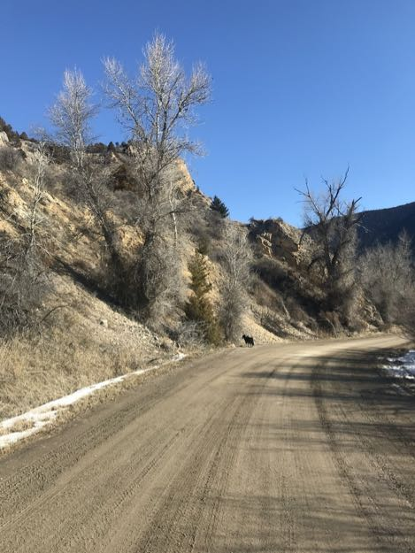 Montana road, dog in distance, blue sky, ocher cliff.
