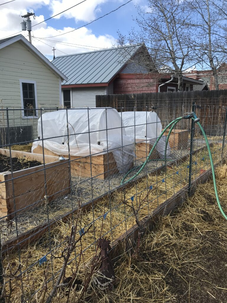 Four high raised garden beds, two with plastic hoop houses. One long low raised bed in foreground.